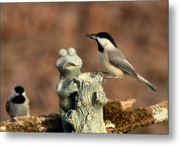 Two Black-capped Chickadees And Frog Metal Print
