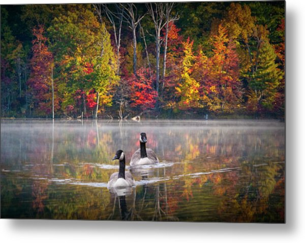 Two Canadian Geese Swimming In Autumn Metal Print