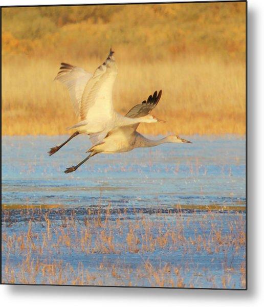 Two Cranes Cruising Metal Print