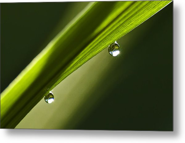 Two Dew Drops On A Blade Of Grass Metal Print by Michael Whitaker