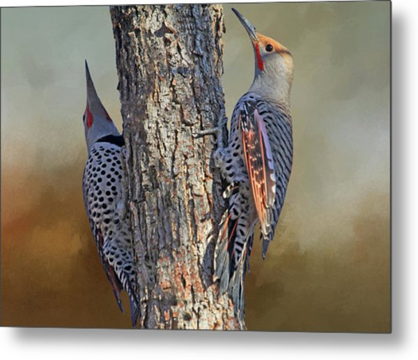 Two Flickers Metal Print