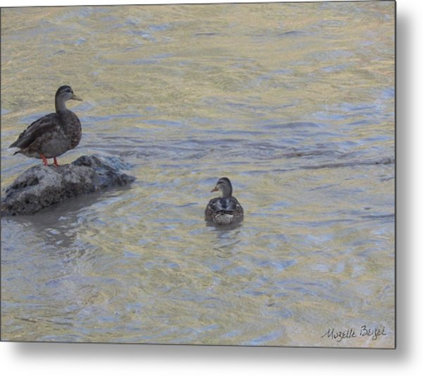 Two Mallard Ducks Metal Print