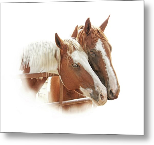 Two Paint Breed Horses Portrait Metal Print