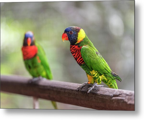 Metal Print featuring the photograph Two Parrots by Pradeep Raja Prints