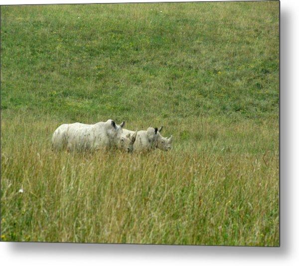 Two Rhino In The Grass Metal Print by George Jones