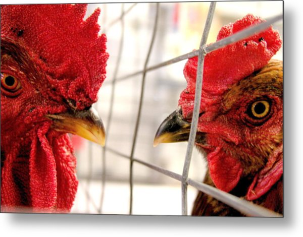 Two Roosters Metal Print by Mark Stevenson