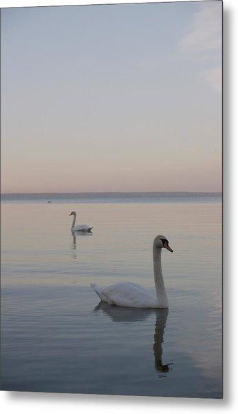 Two Swans Metal Print by Stanislovas Kairys