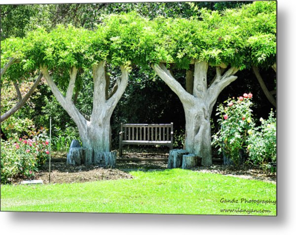 Two Tall Trees, Paradise, Romantic Spot Metal Print