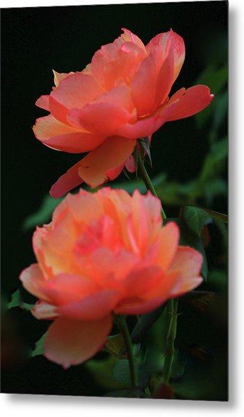 Two Tangerine Roses Metal Print