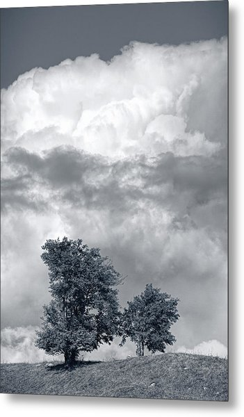 Two Trees #9249 Metal Print