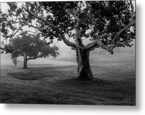 Two Trees Colt State Park Metal Print