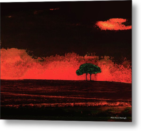 Two Trees In Tuscany Metal Print