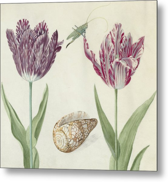 Two Tulips A Shell And A Grasshopper Metal Print