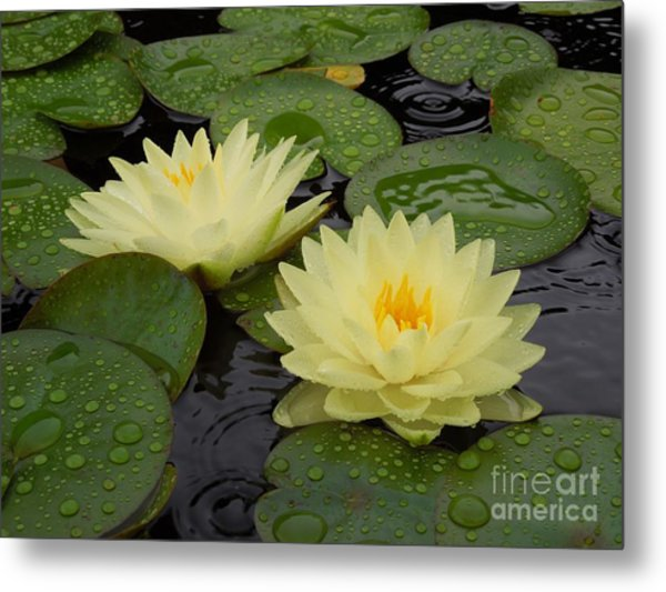 Two Water Lilies In The Rain Metal Print