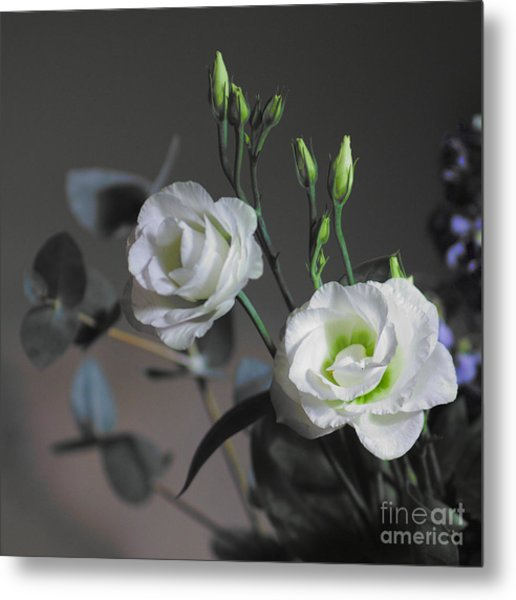 Metal Print featuring the photograph Two White Roses by Jeremy Hayden