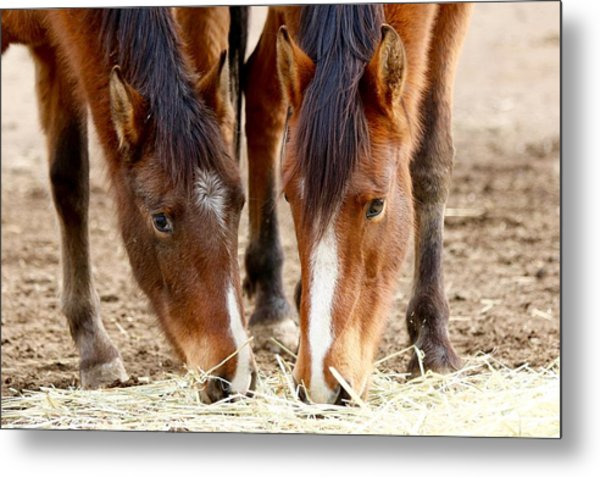 Two Young Friends Metal Print