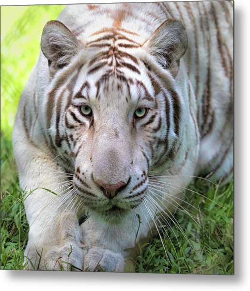 Metal Print featuring the photograph Tzatziki by Susan Rissi Tregoning