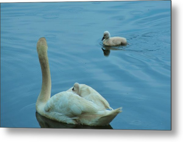 Ugly Ducklings Metal Print