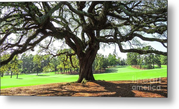 Under An Augusta Oak Metal Print
