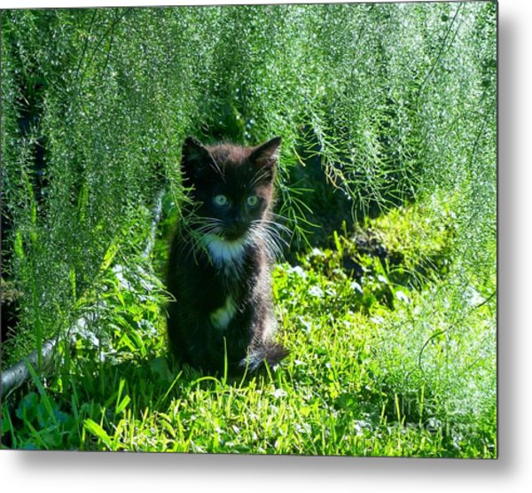 Kitten Under The Asparagus Ferns Metal Print