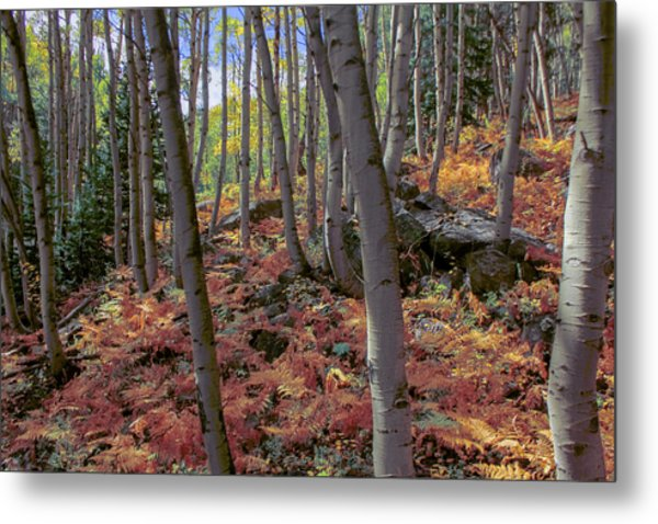 Under The Aspens Metal Print