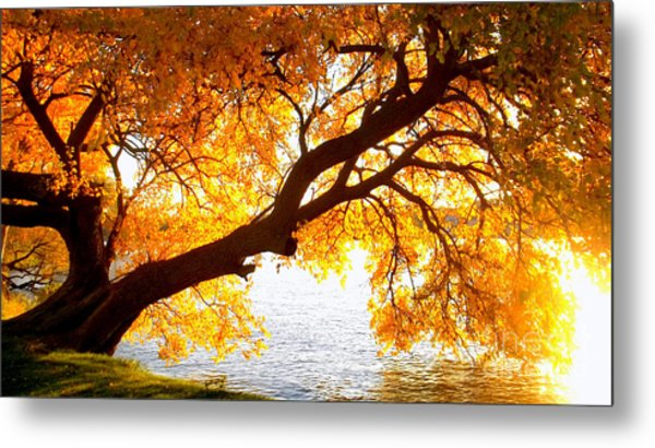 Under The Yellow Tree Metal Print