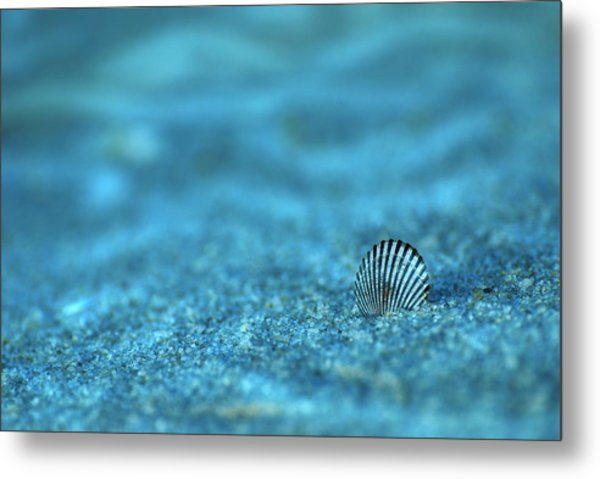 Underwater Seashell - Jersey Shore Metal Print