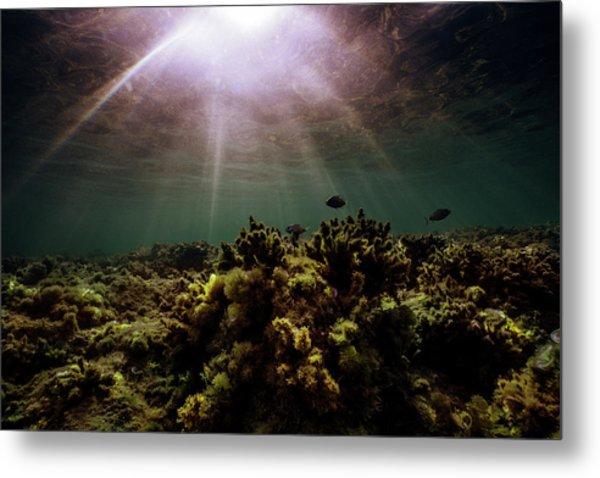 Underwater Sunset Metal Print