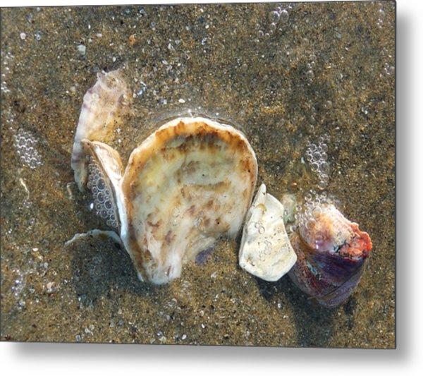 Underwater Treasures Metal Print by Margie Avellino