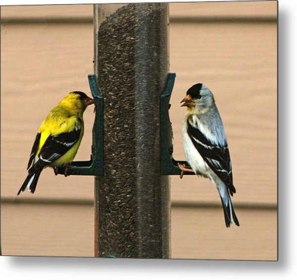 Unmatched Pair Metal Print by Wilbur Young