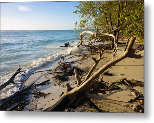 The Unspoiled Beaty Of Barefoot Beach Preserve In Naples, Fl Metal Print