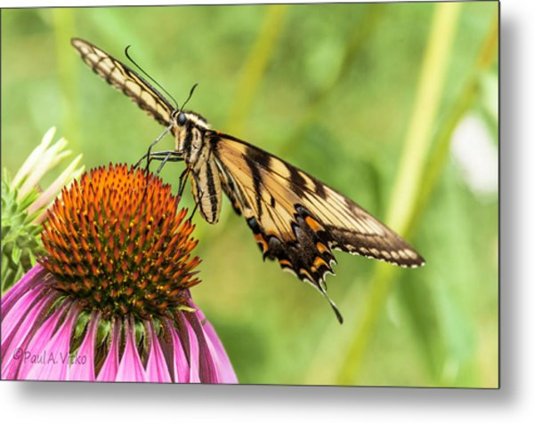 Untitled Butterfly Metal Print