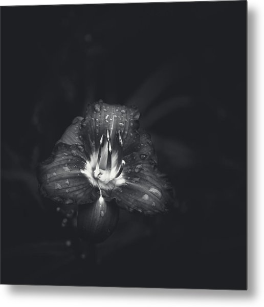 Untitled Lily Metal Print