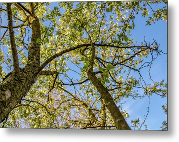Up A Tree Metal Print