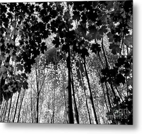 Up Metal Print by Diane E Berry
