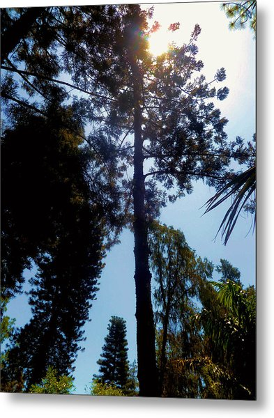 Up In The Sky Trees Metal Print