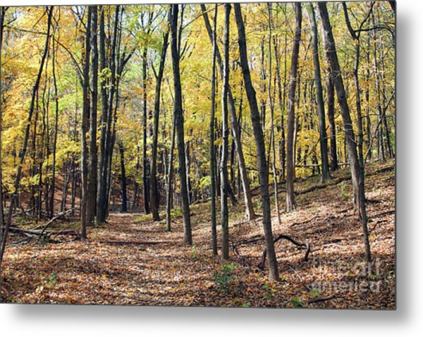 Up The Woodland Trail Metal Print