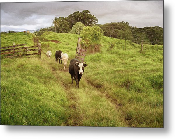Metal Print featuring the photograph Upcountry Ranch by Susan Rissi Tregoning