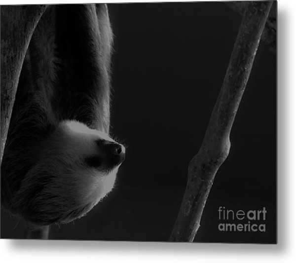 Upside Down Sloth Metal Print