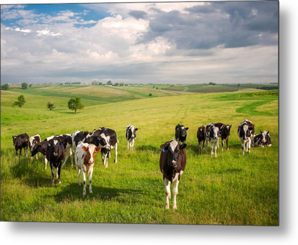 Valley Of The Cows Metal Print