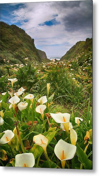 Valley Of The Lilies Metal Print