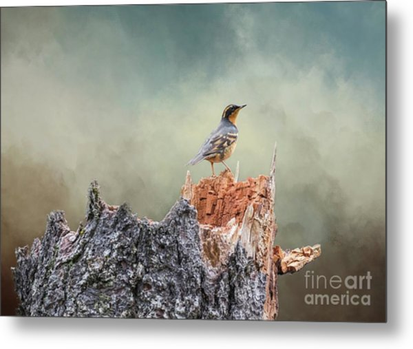 Varied Thrush On A Dead Tree Metal Print