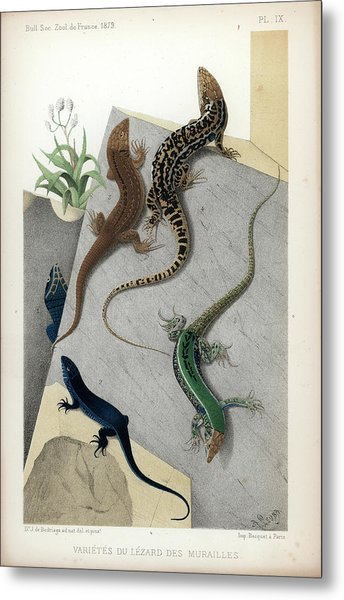 Varieties Of Wall Lizard Metal Print