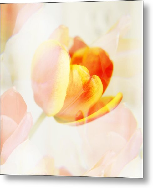 Veiled Tulip Metal Print