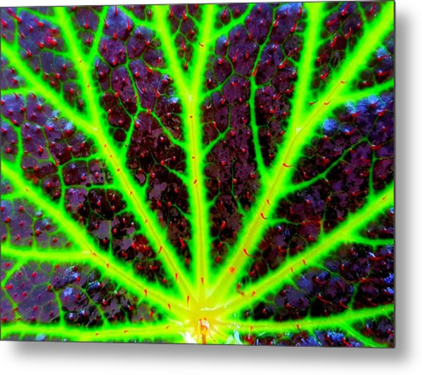 Veins On A Leaf Metal Print