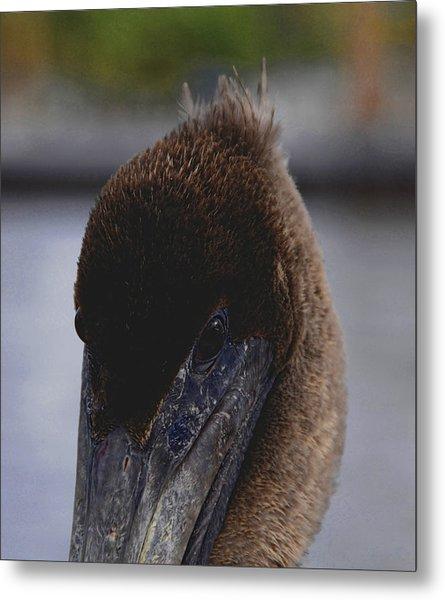 Velvet Brown Pelican Metal Print by Jody Lovejoy