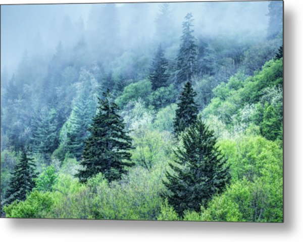 Verdant Forest In The Great Smoky Mountains Metal Print