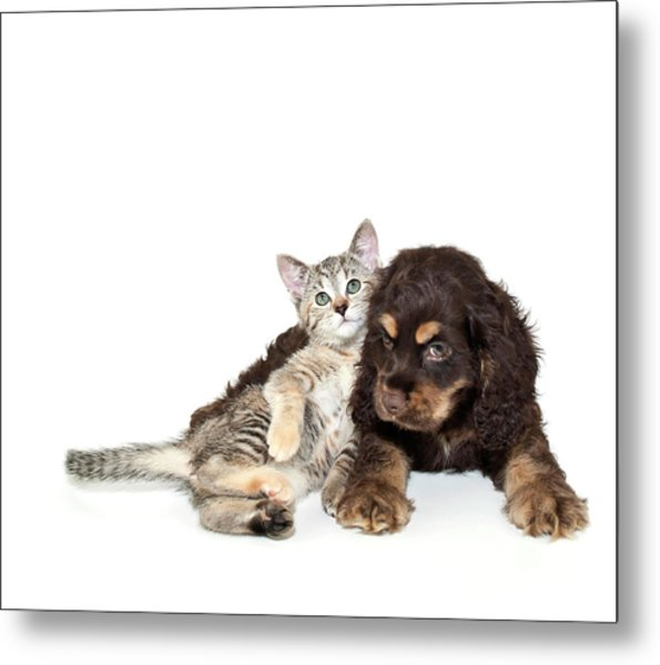 Very Sweet Kitten Lying On Puppy Metal Print by StockImage
