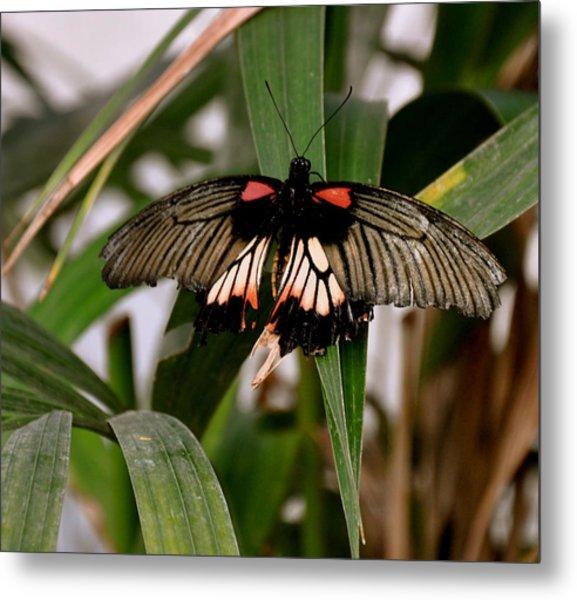 Vibrant Butterfly Metal Print
