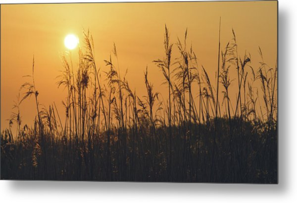 Metal Print featuring the photograph View Of Sun Setting Behind Long Grass A by Jacek Wojnarowski